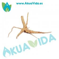 Tronco Spider Med. Aprox. cm