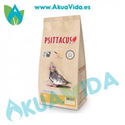 Psittacus Papilla Mini1 Kgr