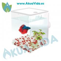 ICA BETAWORLD Cube Iniciación 1.5 l