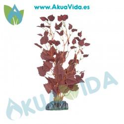 Echinodorus Amarillo Seda 11cm