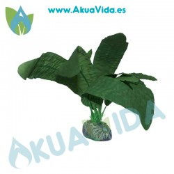 Aponogeton Verde Seda 11 cm