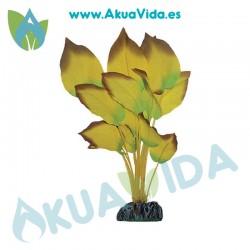 Anubias Amarilla Seda 11 cm