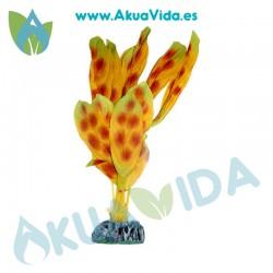 Anubia Marron Moteada Seda 11 cm