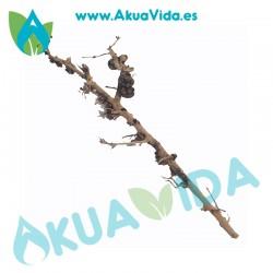 Rama Natural Thailand Tree Med. Aprox. 33 x 5 x 11cm