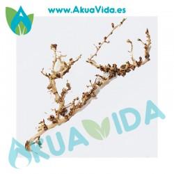 Rama Natural Thailand Tree Med. Aprox. 41 x 9 x 6 cm