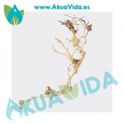 Rama Natural Thailand Tree Med. Aprox. 38 x 8 x 10 cm