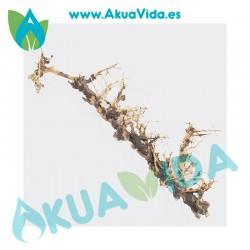 Rama Natural Thailand Tree Med. Aprox. 40 x 7 x 14 cm