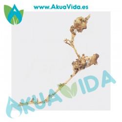 Rama Natural Thailand Tree Med. Aprox. 37 x 8 x 15 cm